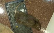 Aparecen varias ratas en la comisaría de la Ertzaintza de Sestao