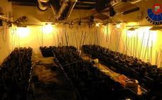 Desmantelan una plantación de marihuana en una nave industrial abandonada de Barakaldo
