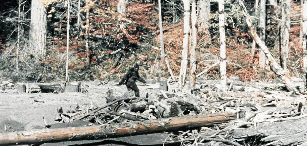 El esquivo bigfoot cumple 60 años