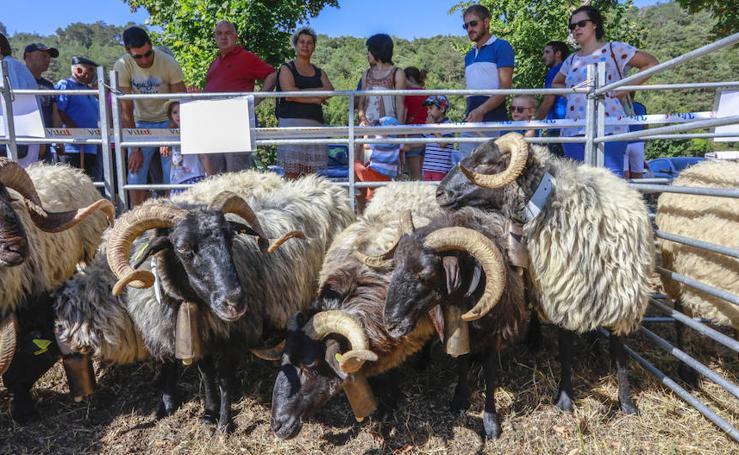 La tradicional Feria de Angosto