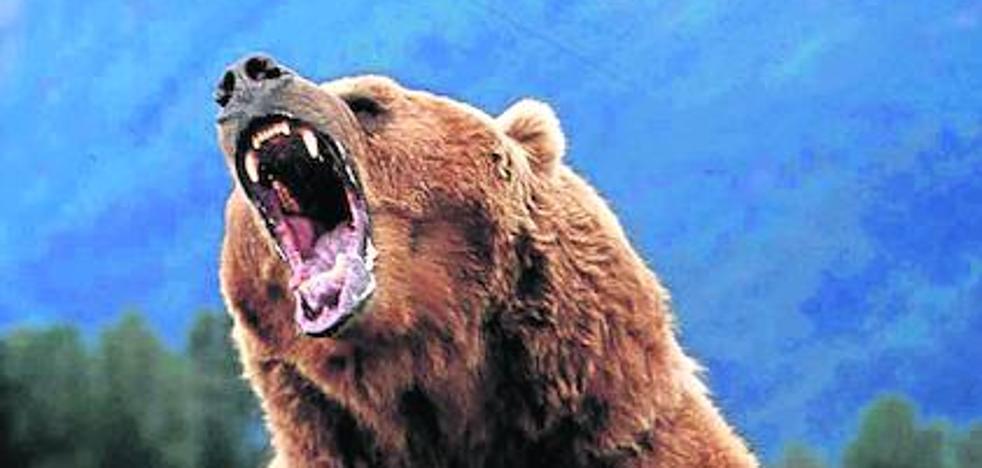 Tensa tregua para el grizzly