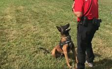 'Enno', el perro desaparecido de la Ertzaintza, visita la Unidad de Rescate