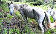 «El caballo se muere», alerta el ganadero que acusa de maltrato a la Diputación