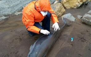 Dos décadas de atención a los cetáceos