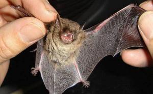 Los murciélagos que mordieron a dos personas en Huelva y Valladolid tenían rabia
