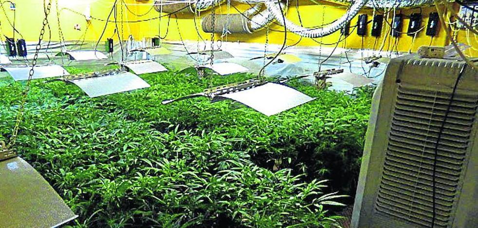 La mayor factoría de marihuana de Álava ocultaba 2.900 plantas en Legutiano