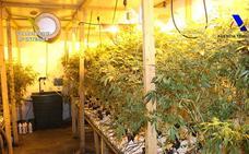 La Guardia Civil detiene a 4 personas por la mayor plantación de marihuana de Álava