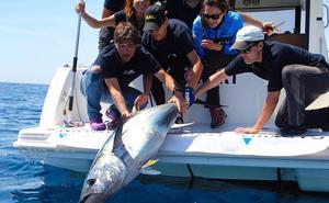 Una decena de barcos competirá en el marcaje electrónico de atún rojo en Bermeo