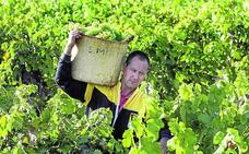 El PNV insiste en el 'modelo Burdeos' para diferenciar el vino alavés «sin romper la DOC»