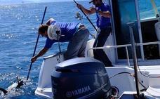 Pescan un «enorme» atún rojo de 130 kilos en la competición Bermeo Tuna Ragging Race