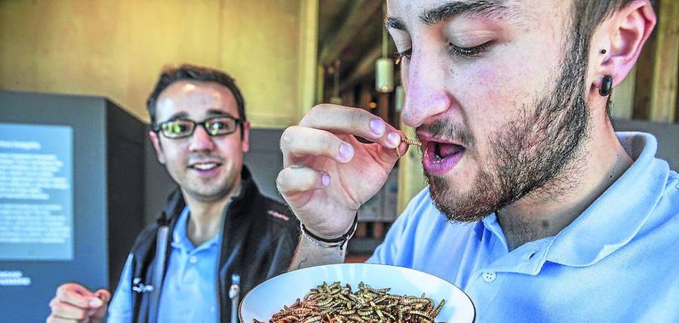 ¿Te apetece probar unos gusanos?