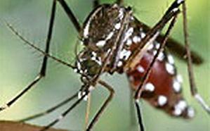 Basauri fumiga la zona de Mercabilbao para erradicar el mosquito tigre