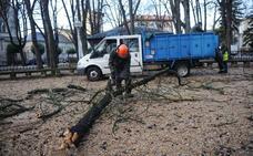 Vitoria se planta contra las podas de árboles con nidos