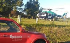 Muere un hombre al caerle un árbol mientras trabajaba en Markina