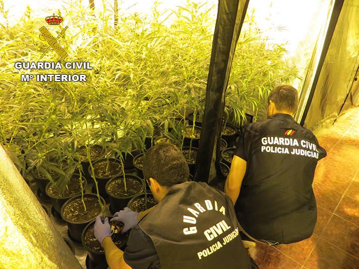 Descubren 170 plantas de marihuana en un caserío de Muxika