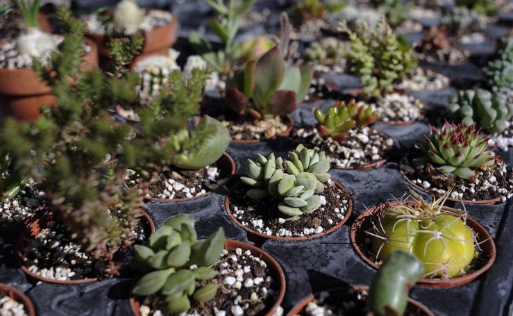 Desde plantas aromáticas a carnívoras en el campus de Leioa