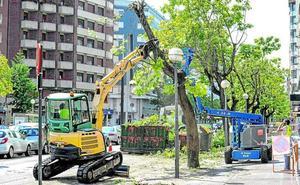 Vitoria prosigue por Lovaina la tala de casi un centenar de árboles enfermos
