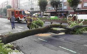 La caída de un árbol provoca el corte de Lehendakari Agirre en Deusto durante una hora