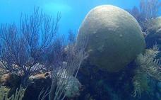 Ehun urteko koral baten eskeletoak kutsadura ez dela hain handia adierazi du