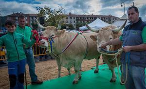 El ganado de Iurreta no encuentra rival