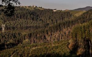 Las instituciones vascas fumigarán los bosques con aviones para frenar la 'peste del pino'