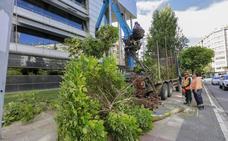 El Ayuntamiento tala los árboles de la calle Lascaray