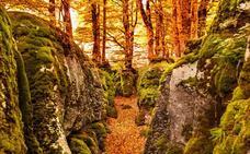 Cuatro bosques extraordinarios para el otoño