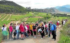 Ruta Los caminos de la vendimia en La Rioja