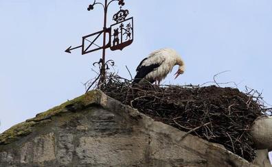 Retiran cinco nidos de cigüeña de dos iglesias de Orduña para evitar daños