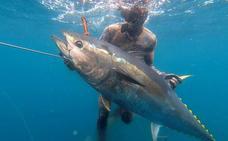 A la caza del atún rojo