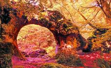 El mundo mágico de Opakua