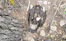 Piden dos años y medio de cárcel para un hombre por envenenar a un águila en Badajoz
