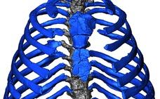 Los neandertales caminaban más erguidos y tenían mayor capacidad pulmonar que los sapiens