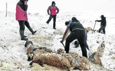 Pastores alaveses denuncian la «escasa vigilancia» de perros sueltos en el monte