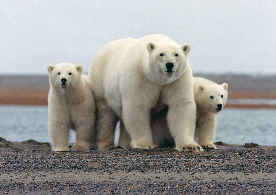 Un puñado de países controlan los reducidos espacios salvajes del planeta