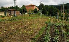 Galdakao mantiene la apuesta por sus 36 huertos urbanos