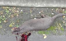 Piden un paso para fauna silvestre que frene el atropello de animales en el corredor del Cadagua