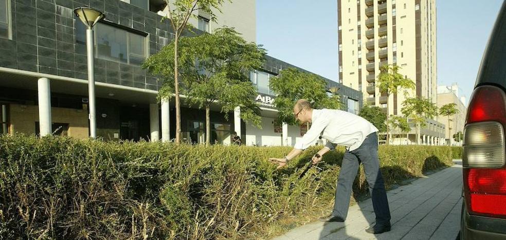 El Ayuntamiento sustituirá por césped los arbustos que dan cobijo a las ratas en Salburua