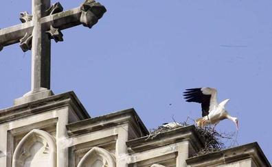 Expertos debatirán en Vitoria sobre el impacto del urbanismo en las aves