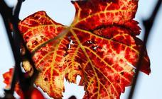 Rojo, ocre, verde… al otoño le salen los colores