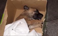 La Policía investiga la muerte en Bilbao de un cachorro «lanzado» desde un balcón