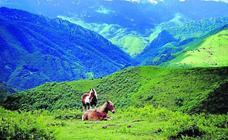 Alta montaña, bosques y agua