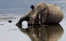 El clima, no los ancestros humanos, culpable de las antiguas extinciones de mamíferos en África