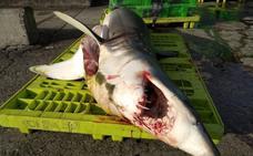 Eguzki cree que «la matanza de tiburones es algo habitual»