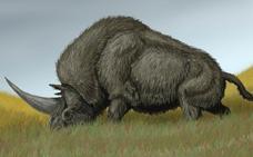 El 'unicornio siberiano' llegó a convivir con los humanos modernos