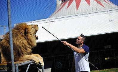 Bilbao no tendrá más circos con animales salvajes