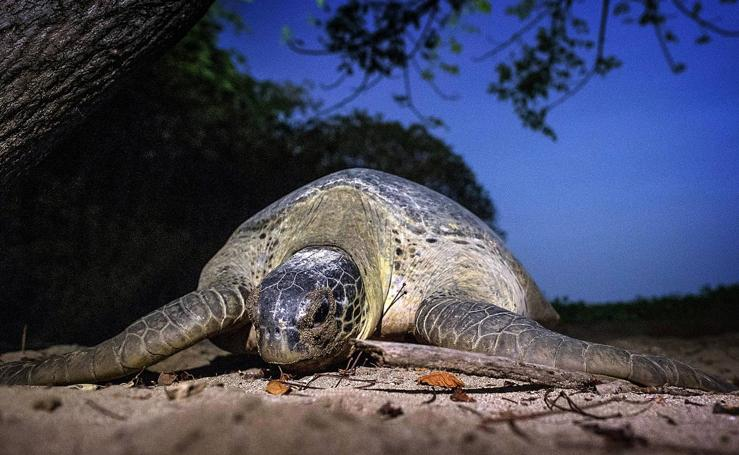 Tortugas en peligro