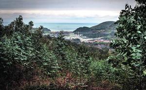 La tala «salvaje» de un bosque en Abanto, impune por un error de la Diputación