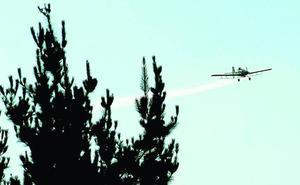 Médicos alertan del peligro de fumigar con avionetas los pinares de Euskadi