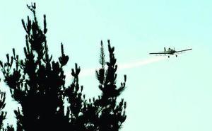El Ministerio de Agricultura aplaza su respuesta a la fumigación de pinos enfermos en Euskadi